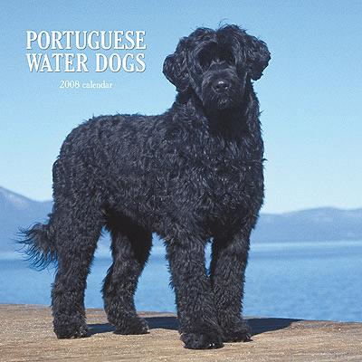 portuguese water dog - cute, active and intelligent. A very nice dog:)