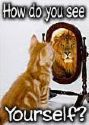 how do you see urself - cat!?