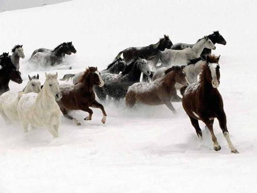 Christmass horse riding - Have you ever tried riding horses during winter?