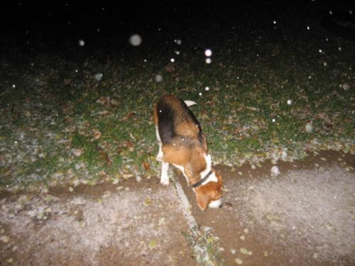 Buster Licking The Snow! - HAHAHAHA! He was waiting for the snow too it seems.