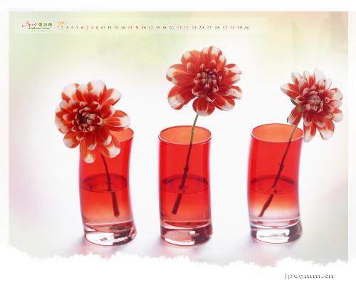 right,couple,flowers,mylot - image