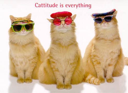 cat trio - catitude