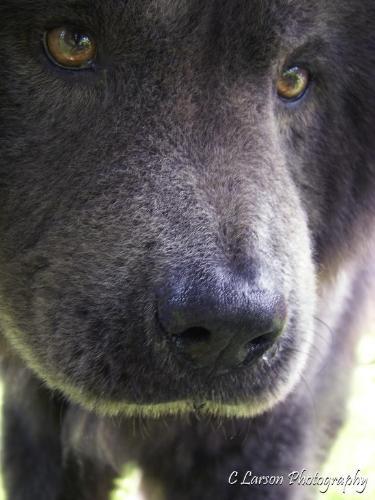 caleb - my aunt's puppy