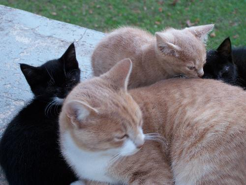 My cats - Enoch with his little brothers and sisters. He was a good big brother.