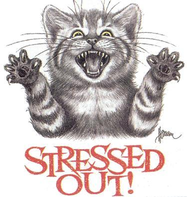 Stressed OUT! - Cat stressed out.