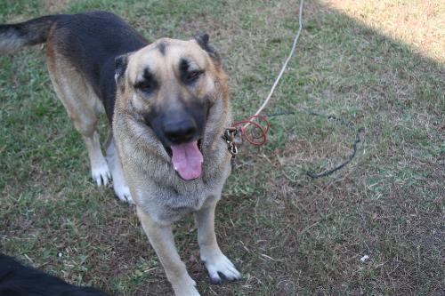 Samurai - He is so kind and friendly with everyone. He is 4 yrs old.