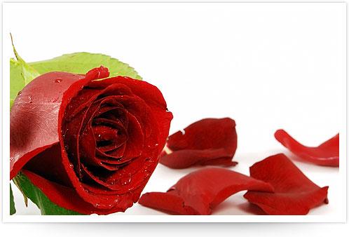 True love  - tell abt ur true love