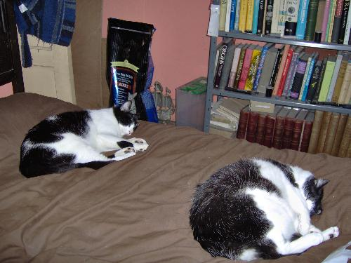 Cats and books - Two of my cats in typical pose and very small part of the bookshelves.