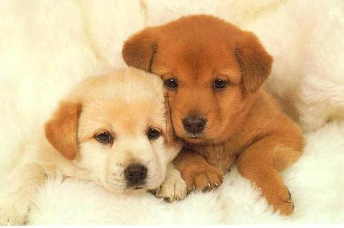 Puppies - Image in my desktop at present.