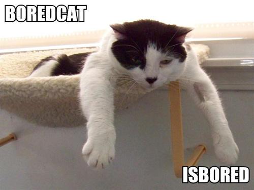 Bored Cat - A very bored Cat