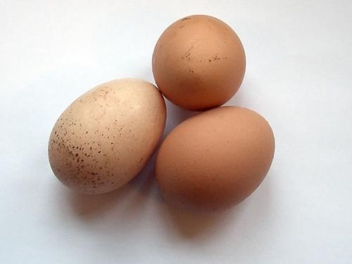 Egg  - egg for health