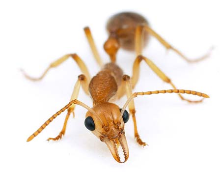 ants - you can not get rid of them they keep coming back i have same problem as long as kitchen is clean and sugar is in fridge they don't have any food so they leave they do however drink from the sink. there is a gel you can try that works for a while but i do not know what it is called in English but ask at your drug store also bleach kills them if you wash the floor with it they don't like it . if you find where they live by following them back out side and put boiling water down the hole every day they get the message in the end and move out.