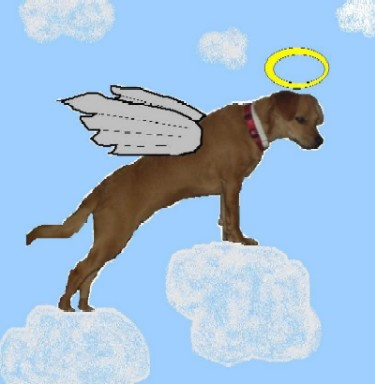 Rosie the Angel Dog! - I had fun making the picture of our dog Rosie as a sweet angel looking out for her family. Our dog Rosie really is a blessing too!