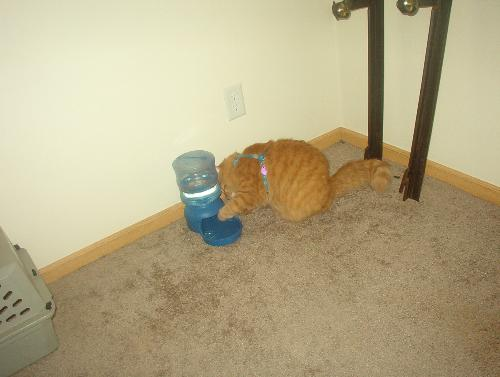 Tigger reaching a paw in.. - ..to make the water come down into the bowl some more.
