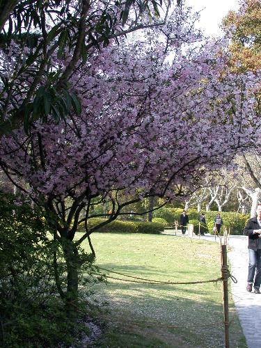 Spring - photos took last year in a near park
