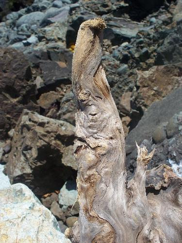 photo, driftwood, old wizard - Picture of a piece of driftwood