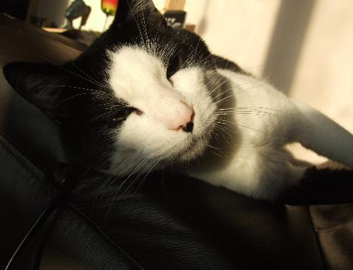 Bob Cat - This is my cat Ollie, or Bob for short, don't ask why!