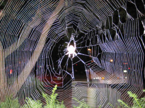 Spider in its web - Spiders have many many superstitions attached to them, and to kill them is believed to be very bad luck indeed.