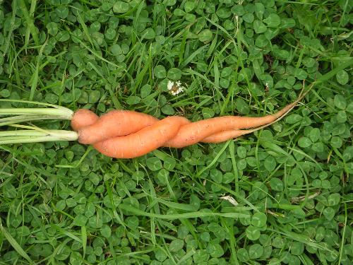 love carrots - how is that..?what do u perceive?!!