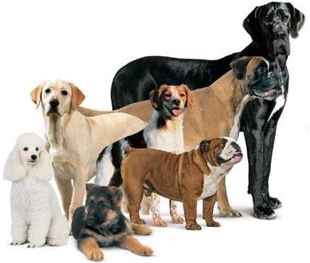 Cute puppies - different breeds of dogs