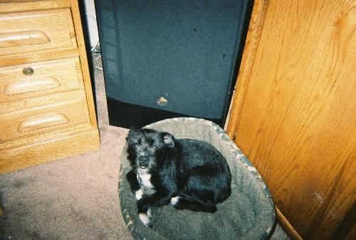 Bauzer - doesn't he look so sweet in his little bed