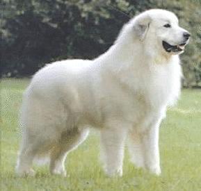 Nameless Dog! - He needs a great name, help him! =P