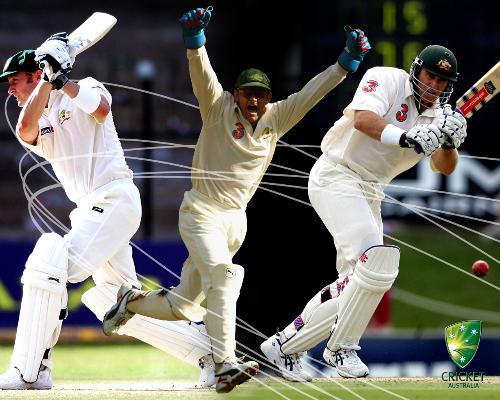 Cricket - cricket..