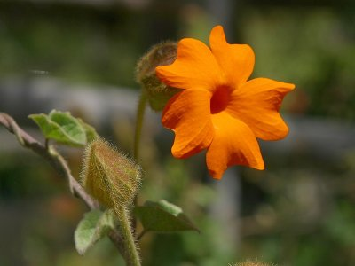 a beautiful flower - a picture of beautiful flower