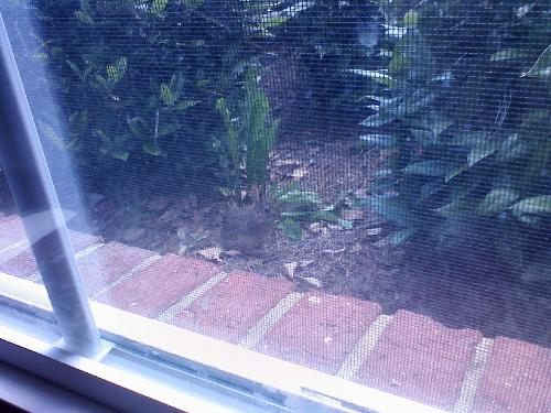 Baby Bunny - Click on Pic to open...it was no bigger than my balled fist.