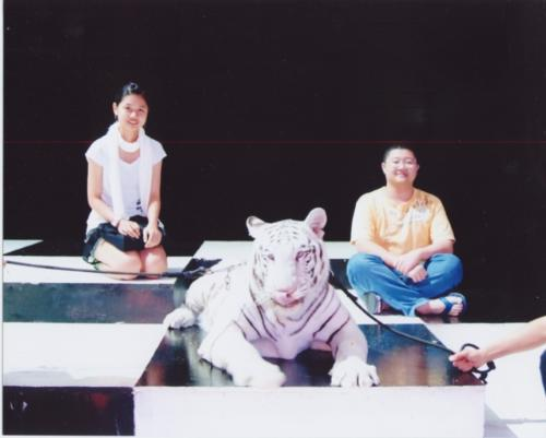 Photo Taken with White tiger - Photo taken with Siberian Tiger (a.k.a. white tiger) in my trip.