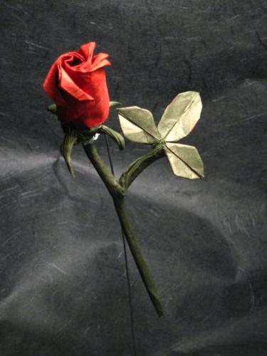 Rose - A picture of rose