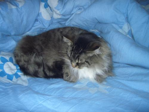 Tabitha - My cat who is ill at the moment. :(