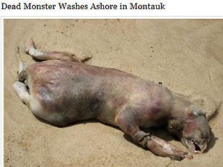 Montauk Monster  - Mystery animal washed ashore