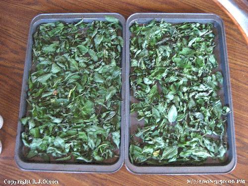 Fresh Mint - grown in my back yard in Minnesota.