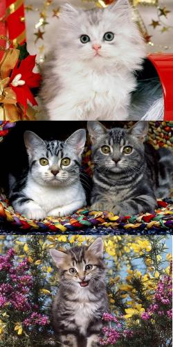 lovely cats - I have some photos that I gather it in one image my kids love it so much.