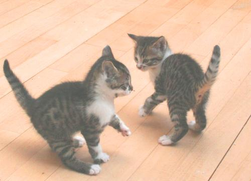 Kittens - The kittens but you can't see their markings very well.