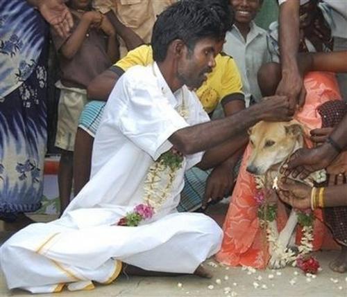 Novel way to lift curse.. - Marry a DOG??