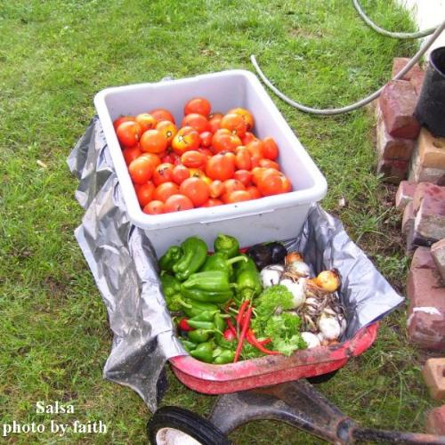 Produce from Garden - pictured are tomatoes, onions, garlic, green peppers, jalepino peppers, and kung poa peppers - the makings for salsa.