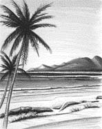 beach scene with oceanwater and palm trees - beach scene with ocean water and palm trees
