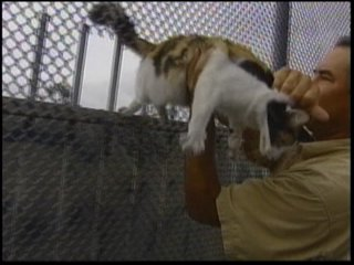 Kitty Being Rescued - image of the cat rescued that was stuck on highway sign