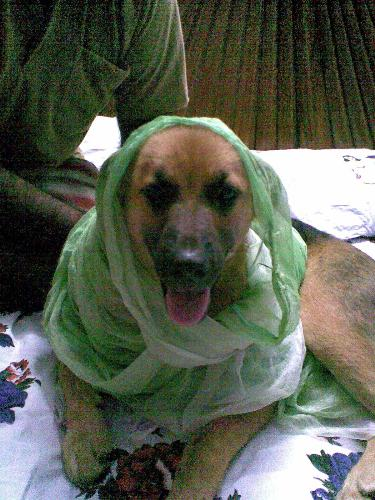 My cutie pie!! - Here you can find my cutie pie with a dupatta!!!Which is the cutest pet you have ever had????