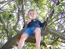 Tree climbing. - Tree climbing.