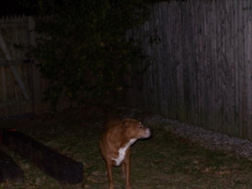 Sable looking for her friends - It's late, but Sable thinks her friends should still be out there for her to play with