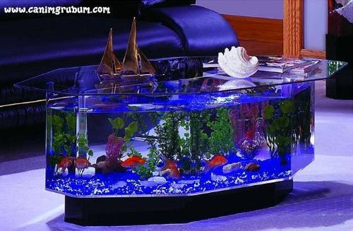 a beautiful aquarium - Wow what a beautiful aquarium and teapoy..