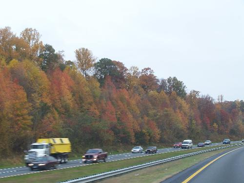 Trees turning colors - The trees along the highway on my way to work.