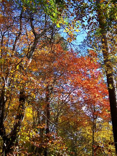 Fall Colors - Fall leaves as we walk on a nature trail at High Falls, GA