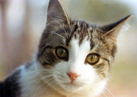 cat - Cut lovely cat
