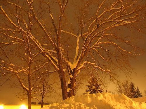 A tree in winter - A snow covered landscape and tree.