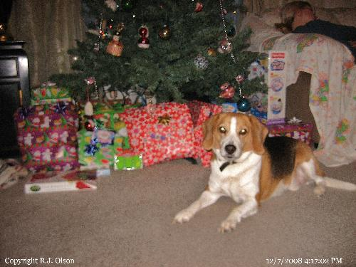 Buster - He loves lying near the tree.