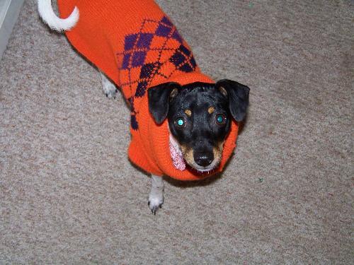Me Daisy May - Me Daisy May spoting a new sweater